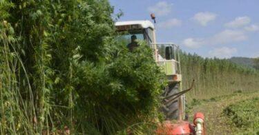 Hemp as Biofuel